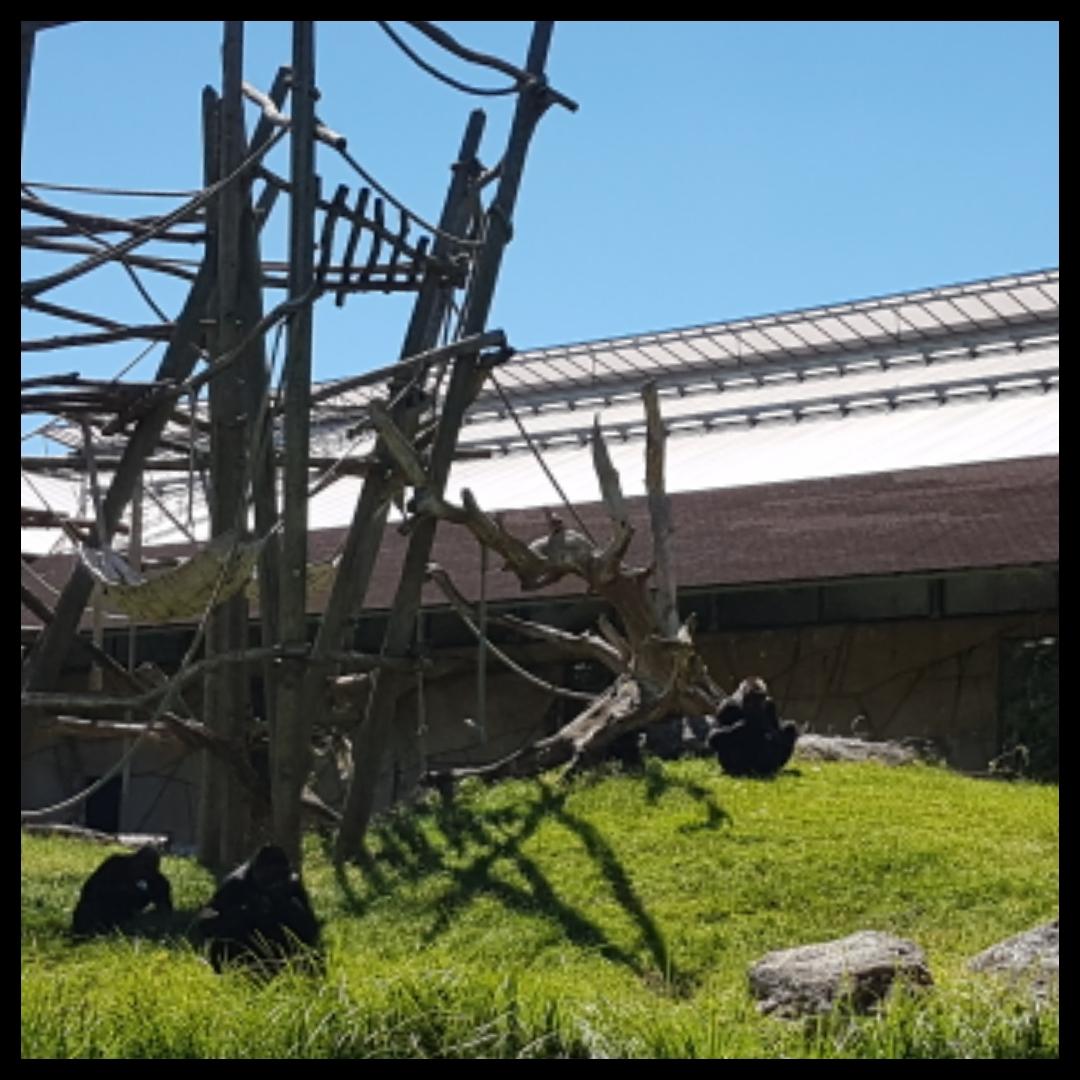 IMG_2017-06-12_15-10-29